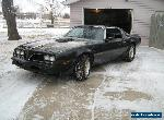 Pontiac: Firebird BANDIT CLONE for Sale